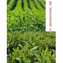 拜农防冻害中药叶面肥,植物防冻害措施,防冻害图片