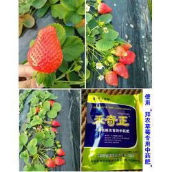 草莓有机肥-拜农生物(优质商家)怎么给草莓施草莓有机肥图片