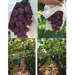 拜农葡萄专用中药叶面肥 葡萄树施哪种叶面肥料好-叶面肥图片