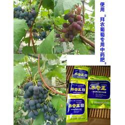 拜农葡萄专用中药叶面肥,葡萄用什么复合叶面肥料,葡萄叶面肥图片