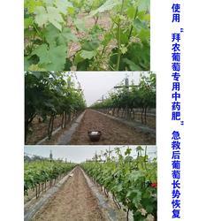 葡萄树用什么叶面肥料好,葡萄叶面肥,拜农生物(在线咨询)图片