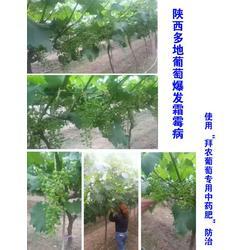 中医农业,中医农业发展,拜农中医农业中药肥(多图)图片