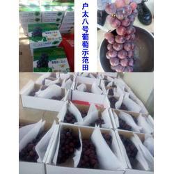 葡萄果树有机肥的、永嘉有机肥、拜农中药有机肥图片