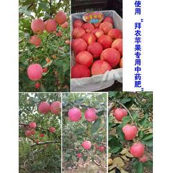苹果果树农药叶面肥_永平叶面肥_拜农中药叶面肥图片