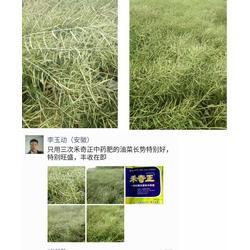 冻害、低温冻害的原因、拜农防冻害中药叶面肥图片