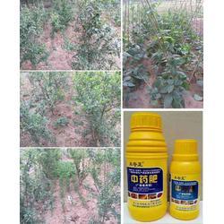 冻害、拜农防冻害中药叶面肥(优质商家)、预防冻害的措施有哪些图片