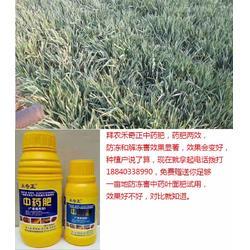 冻害,拜农防冻害中药叶面肥,如何预防低温冻害图片