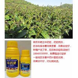 冻害|拜农防冻害中药叶面肥|农作物低温冻害图片
