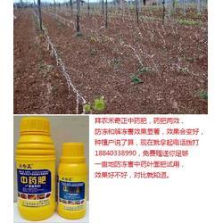拜农防冻害中药叶面肥|冻害|春季作物冻害的措施图片