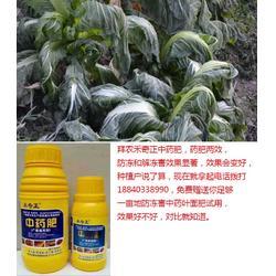 冻害,拜农生物(在线咨询),如何预防低温冻害图片