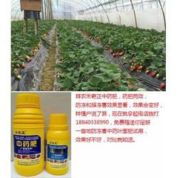 植物防冻剂、拜农植物防冻剂中药叶面肥、植物防冻剂有效吗?图片