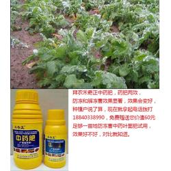 预防植物冻害的措施|冻害|拜农防冻害中药叶面肥(图)图片