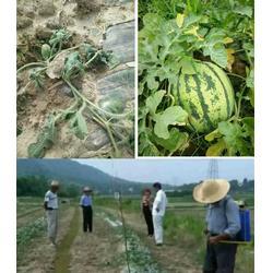 禾奇正|拜农生物(在线咨询)|禾奇正能浇花吗图片