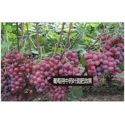 葡萄中药叶面肥_拜农生物_黄山中药叶面肥价格