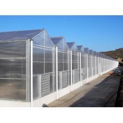 合肥阳光板温室、阳光板温室大棚公司、合肥建野大棚(多图)图片