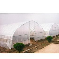 宿州大棚、合肥建野、大棚厂家图片