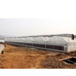 安徽大棚 合肥建野大棚公司 一亩大棚造价多少钱图片