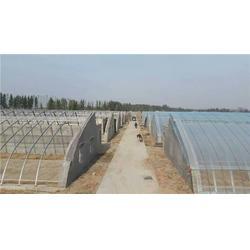 郑州简易温室大棚安装,温室大棚,【富农蔬菜温室】图片