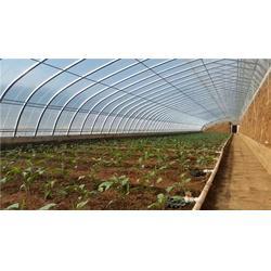 温室大棚、张掖温室大棚造价、【富农温室】(优质商家)图片
