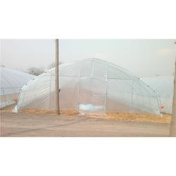 定西食用菌大棚搭建厂家、(富农温室)(在线咨询)、食用菌大棚图片