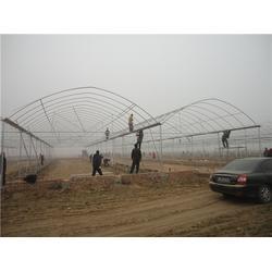 寶雞連棟大棚建設廠家(富農溫室)寶雞連棟大棚圖片