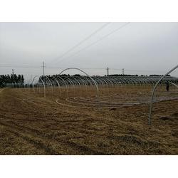 兰州椭圆管温室大棚厂家-椭圆管温室大棚(富农温室)图片