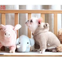 河南法牛犬幼犬,尊宠天下,河南法牛犬幼犬图片