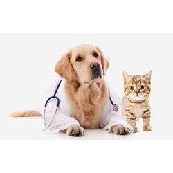 宠物诊疗哪里有,合肥宠物诊疗,安徽国宠宠物医院(查看)图片