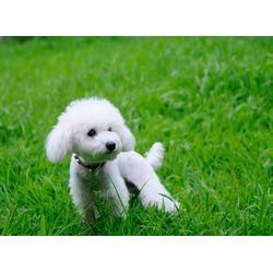 宠物寄养中心、合肥宠物寄养、安徽国宠宠物医院图片