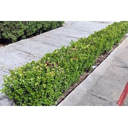 休闲绿化带设计_绿化带_深圳馨卉园林公道(查看)图片