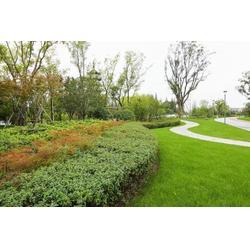 休闲绿化带设计_深圳馨卉园林(在线咨询)_沙头街道绿化带图片