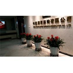 深圳馨卉园林花卉租赁|临时花卉租摆报价|福保街道花卉租摆图片