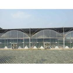 玻璃温室大棚设计建设-漯河玻璃温室大棚 诺博大棚建造图片