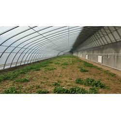 蔬菜温室大棚报价 诺博温室工程 (在线咨询)蔬菜温室大棚图片