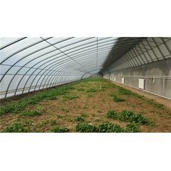 温室大棚建设基地-【诺博大棚搭建】-商洛温室大棚图片