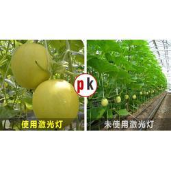 led植物生长灯-聊城生长灯-厂家直销,质优价廉,一站式服务图片
