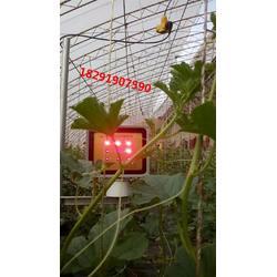 山东大棚植物补光灯