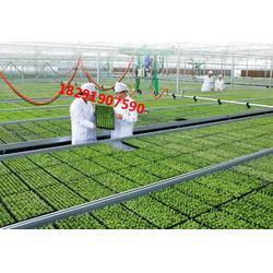漢中補光燈-廠家直銷,質優價廉,一站式服務-補光燈圖片