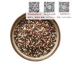 青海藜麦,【青海青藜】(在线咨询),藜麦图片