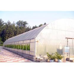 蔬菜大棚、鑫华生态农业(在线咨询)、蔬菜大棚造价图片