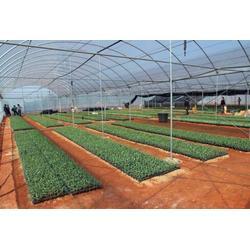 莆田温室,青州鑫华生态农业科技,生态温室餐厅图片