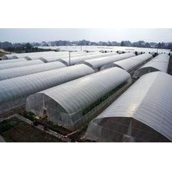 光伏农业大棚|鑫华生态农业|光伏农业大棚设计图片