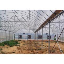 鑫华生态农业(多图),薄膜连栋温室,温室图片