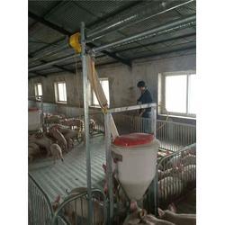 淮安猪舍料线、猪舍料线厂家、牧鑫养殖设备(优质商家)图片