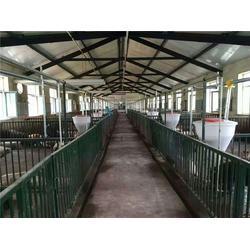养猪料线经销商_养猪料线_牧鑫养殖品质看得见图片