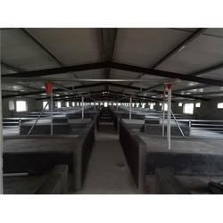 猪舍料线供应商,猪舍料线,牧鑫养殖产品质优价廉(查看)图片