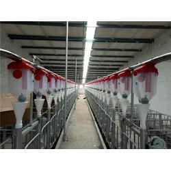 牧鑫养殖品质看得见 自动养猪料线选哪家-自动养猪料线图片