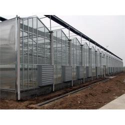 昆明玫瑰花专用棚设计-光明温室大棚-昆明玫瑰花专用棚图片