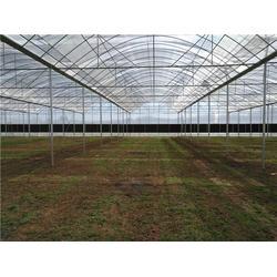 大理钢架大棚-大理钢架大棚施工-光明温室大棚(优质商家)图片
