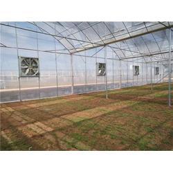 昆明插地棚多少錢-昆明插地棚-光明溫室大棚(查看)圖片